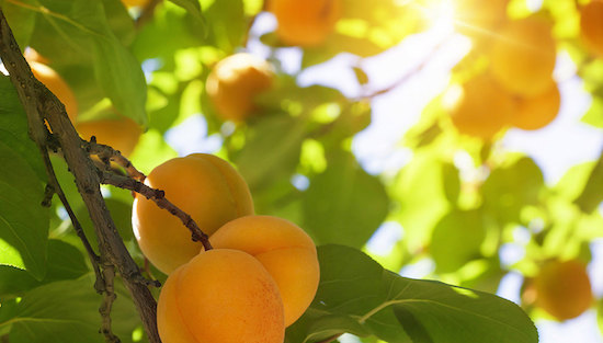 Apricot orchard - forcing equity in real estate properties - developing on an orchard
